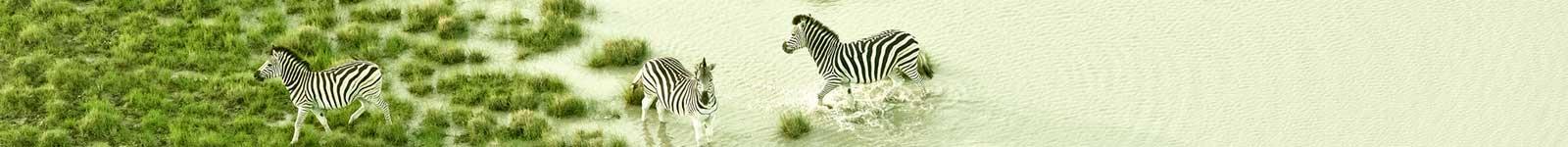 محیط بانی و جنگل بانی و حفاظت از حیوانات توسط پهپاد